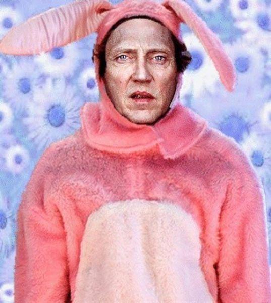 розовый заяц