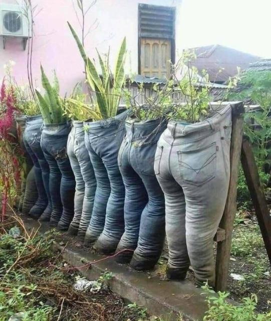растения в старых джинсах