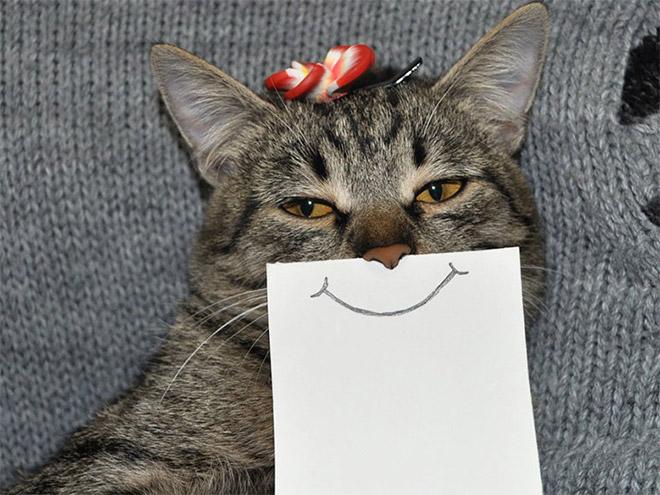 полосатая серая кошка с нарисованной улыбкой