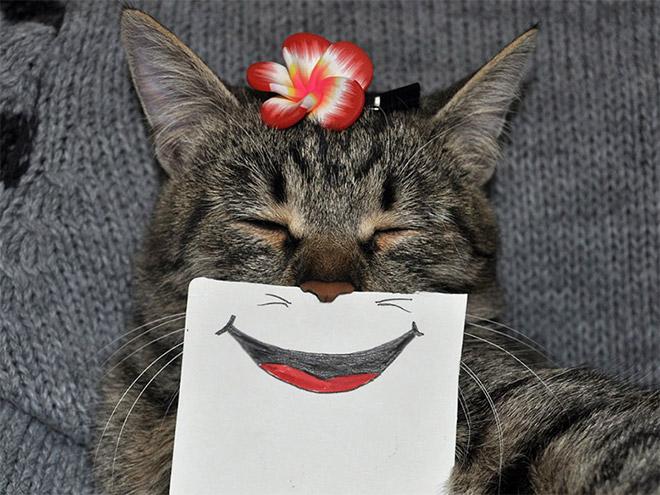 полосатый кот с нарисованной улыбкой
