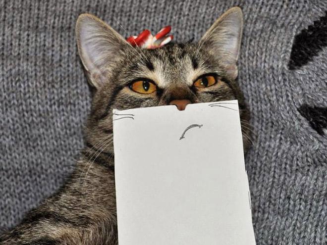 полосатый кот с пририсованным ртом