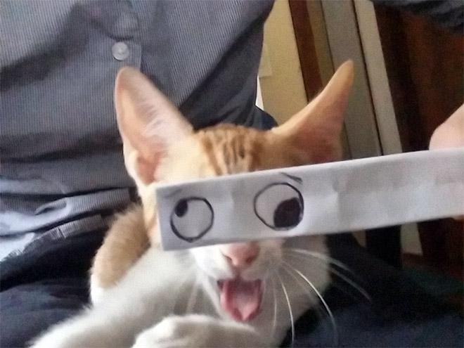рыжий кот с пририсованными глазами