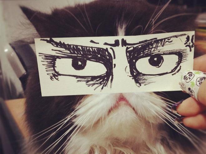 черный кот с нарисованными глазами