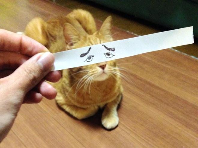 рыжий кот с нарисованными глазами