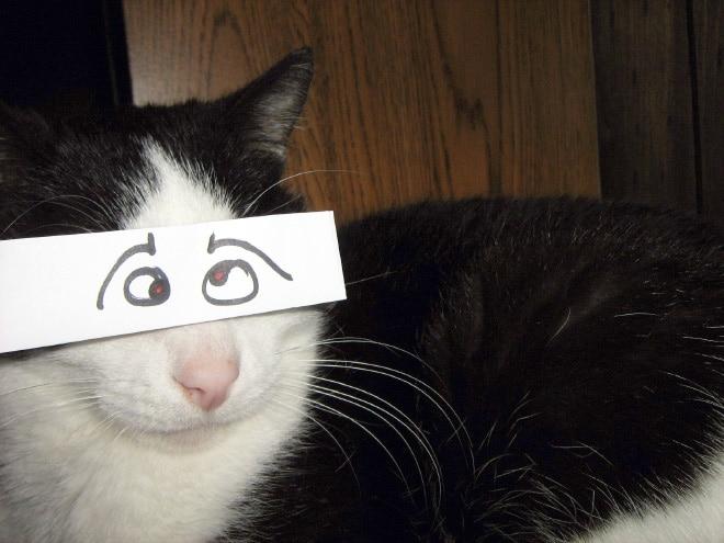 черно-белый кот с нарисованными глазами