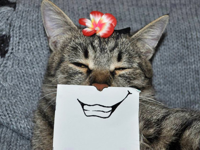 полосатая кошка с цветочком