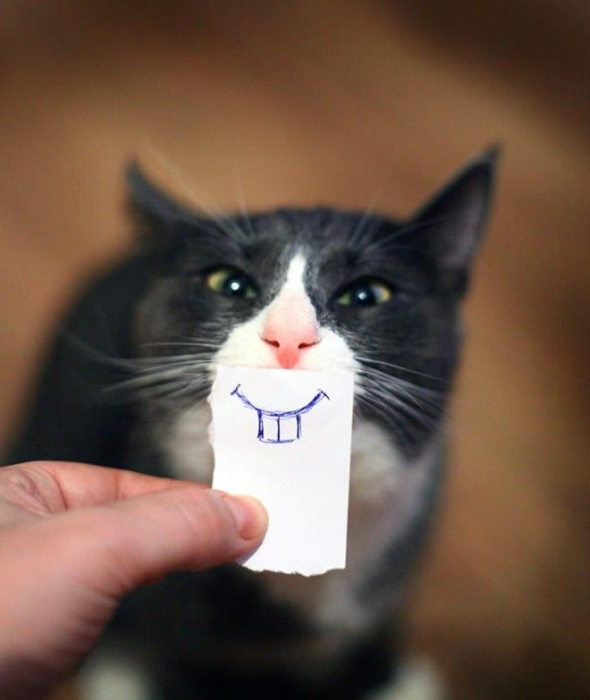 кошка с нарисованным ртом на бумажке