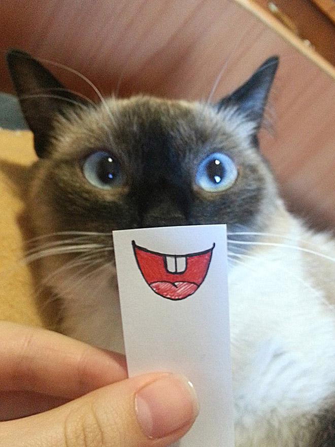 кошка с нарисованным ртом