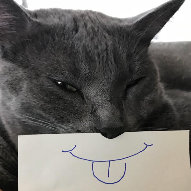 серый кот с нарисованным ртом