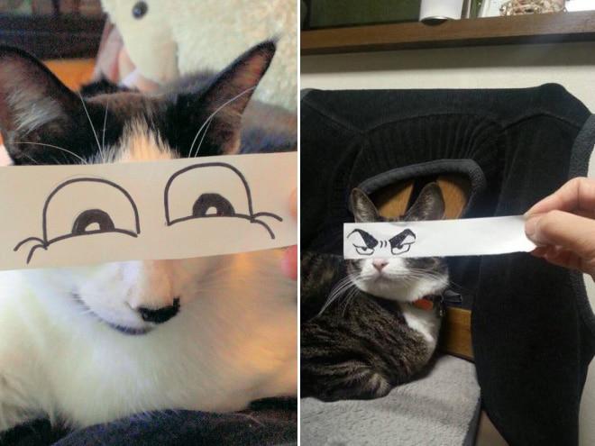 коты с нарисованными глазами