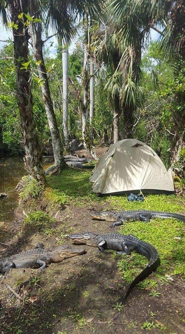 крокодилы возле палатки