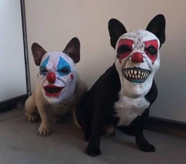 собаки в страшных масках