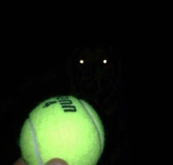 мяч и глаза собаки, светящиеся в темноте
