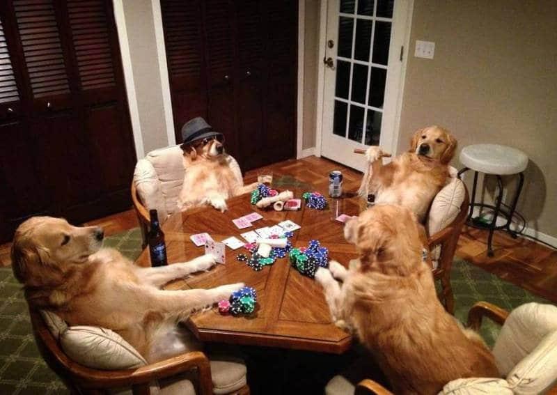 собаки играют в покер