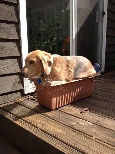 собака в вазоне для цветов