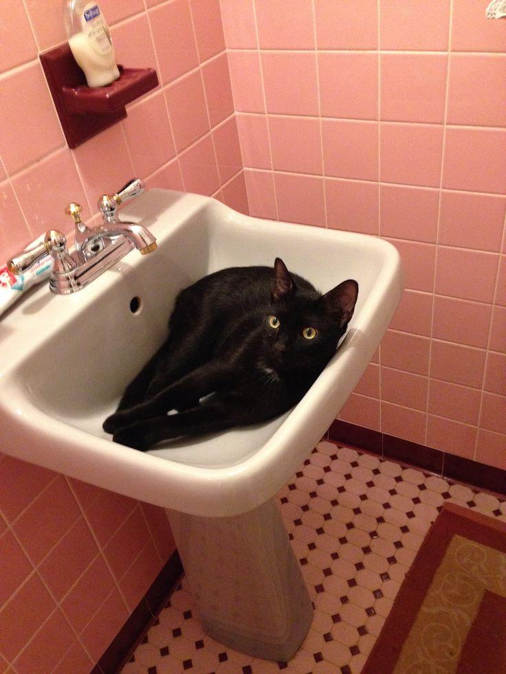 кот в умывальнике