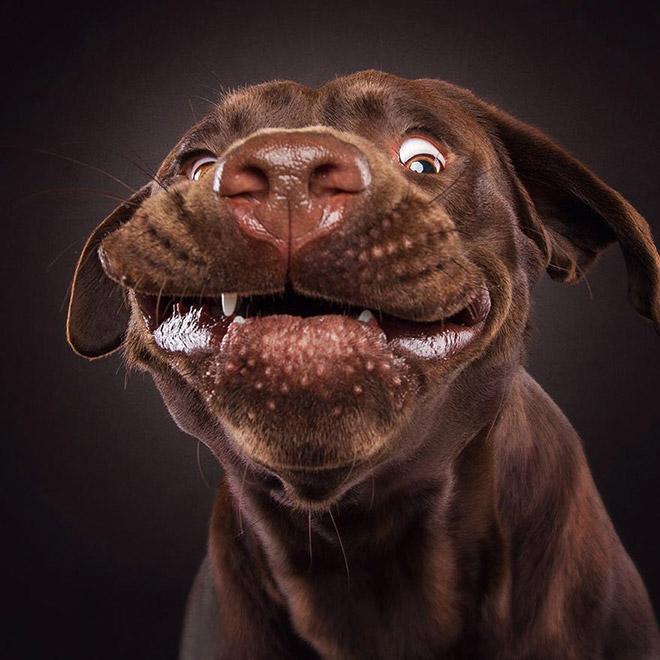 собака ловит еду рис 2