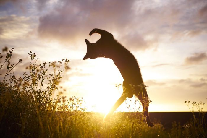 кот прыгает в траве на закате