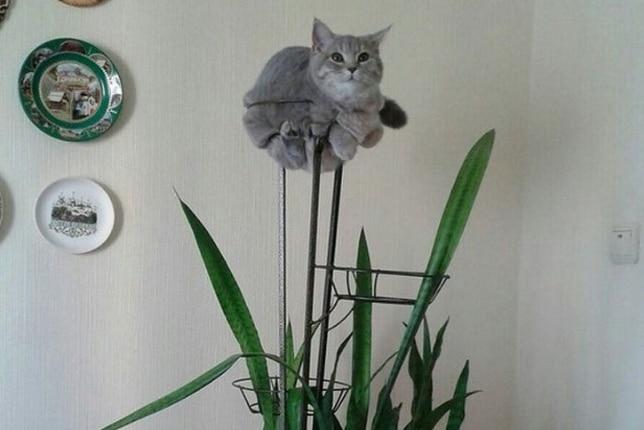 серый кот на подставке для цветов