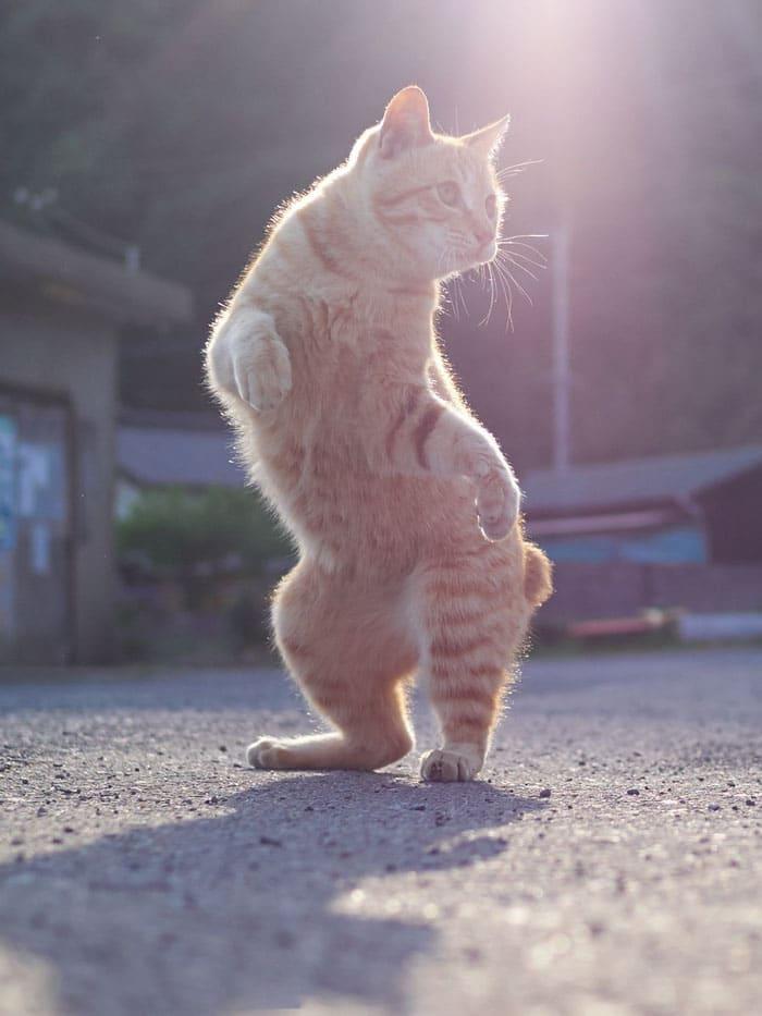 рыжий кот на задних лапах