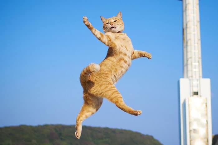 рыжий кот в прыжке