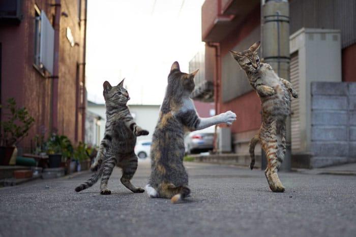 три кота на улице