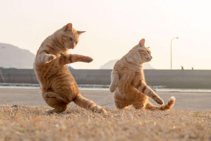 рыжие коты на задних лапах