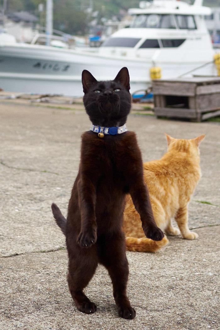черный и рыжий кот