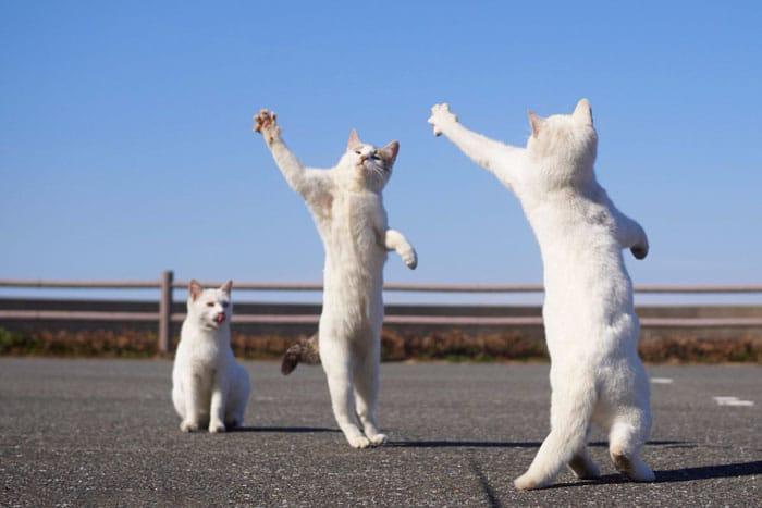 белые коты на задних лапах