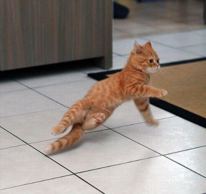 рыжий кот танцует брейкданс