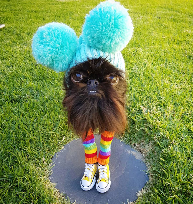 собака в кедах и шапке