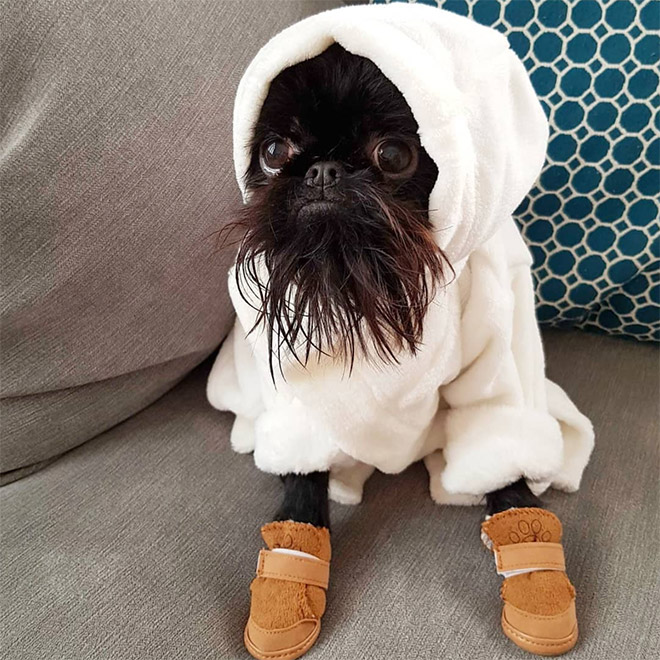 собака в худи и ботинках