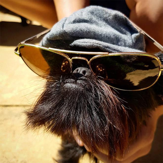 собака в очках и кепке