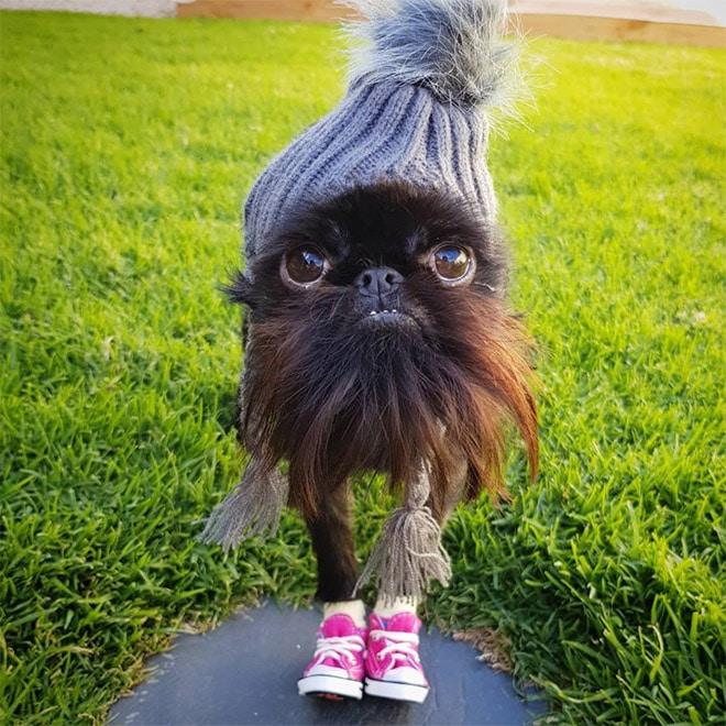 собака в шапке и кедах
