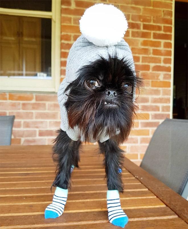 собака в вязаной шапке