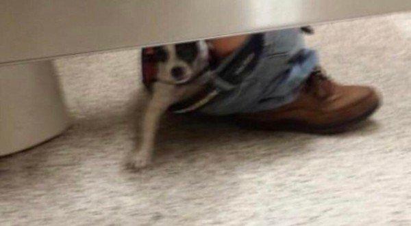 собака сидит в спущенных штанах