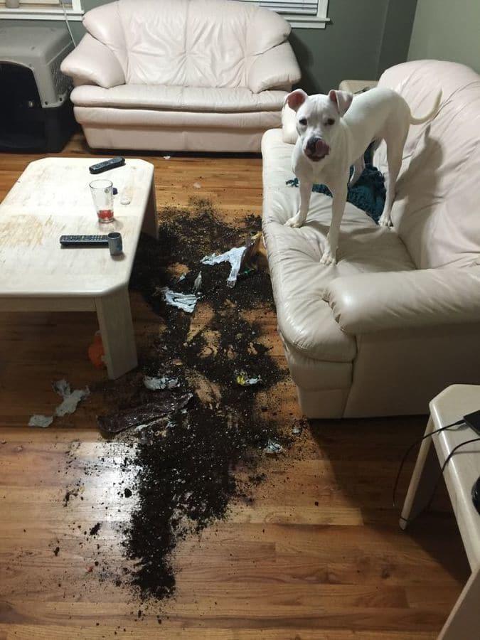 пес и земля на полу