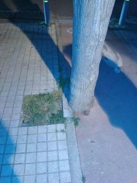 дерево на асфальте