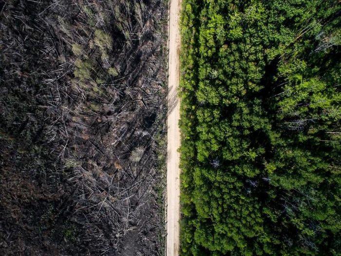 два леса