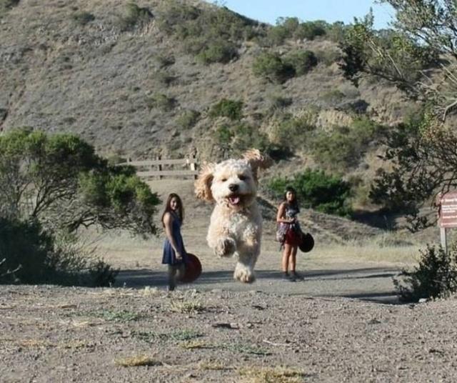 девушки и пес