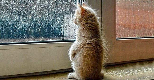 котенок смотрит в окно