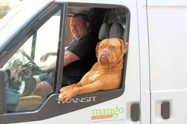 пес за рулем