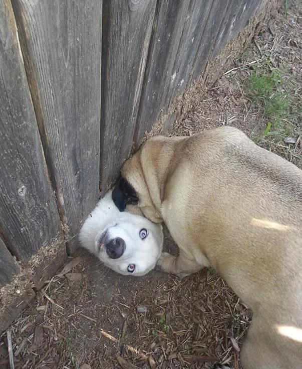 пес пролез под забором