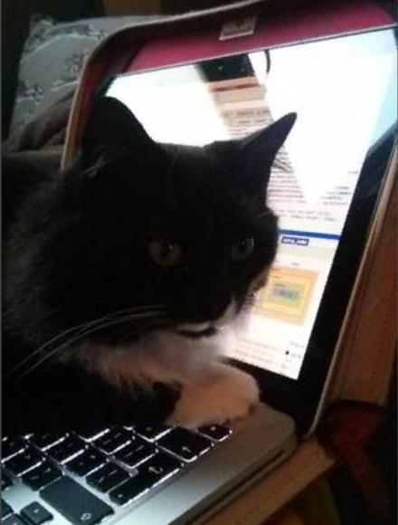 кот на ноутбуке лежит
