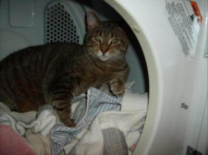 кот в стиральной машине