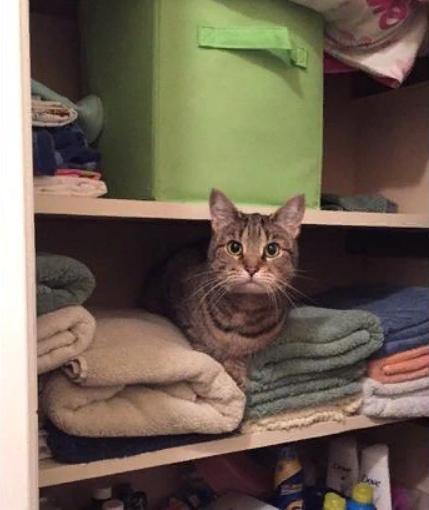 кот в шкафе