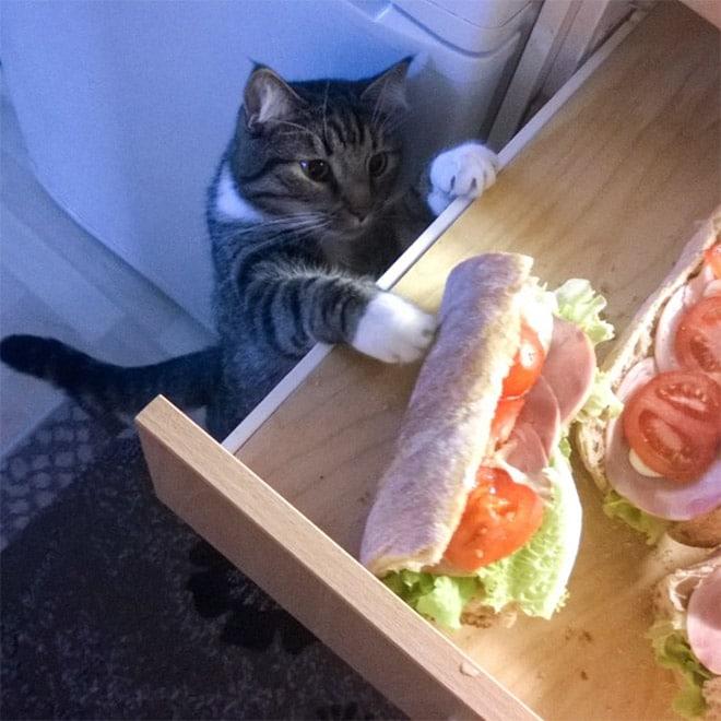 кот тянется за бутербродом