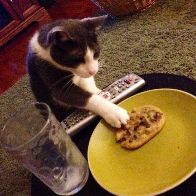 кот лапой в тарелке рис 2