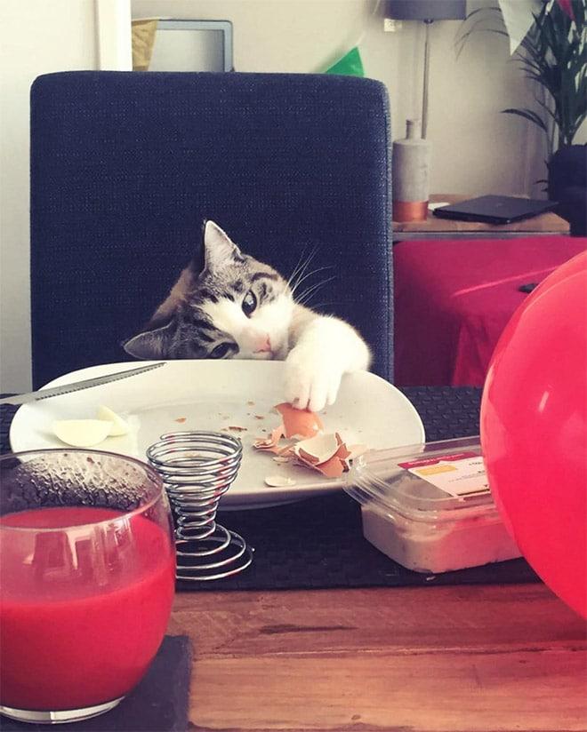кот лапой в тарелке