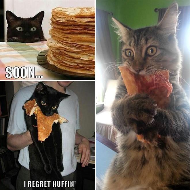 коты с едой во рту